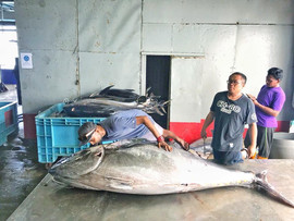 Samah et le plus gros thon albacore