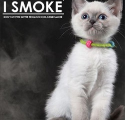 How Smoking Impacts Pet Health