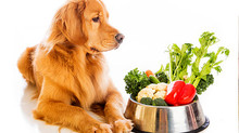 "DOES YOUR PET HAVE ""KIBBLEITIS""? FEED YOUR PETS A NUTRITIOUS DIET!"