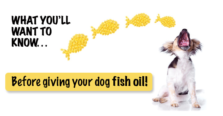 fish oil for dogs.jpg