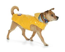 Mugsy with raincoat-2.jpeg