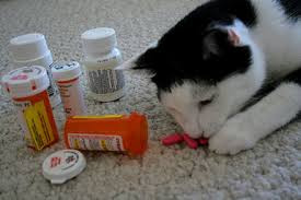 KEEP YOUR PETS SAFE!  HUMAN MEDICATIONS CAN BE LETHAL