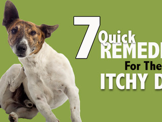 HOW ITCHY IS YOUR DOG?