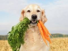 10 Best People Foods to Share With Your Beloved Pet