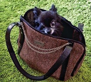 dog in bag 2.jpg