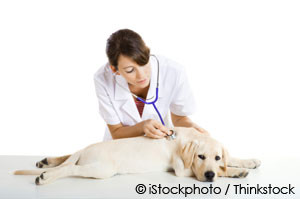 SIGNS OF HEART DISEASE IN DOGS