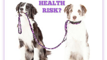 DOES YOUR DOG'S COLLAR POSE A HEALTH RISK?