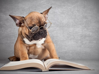 Top 10 Foods for your Dog's Vision