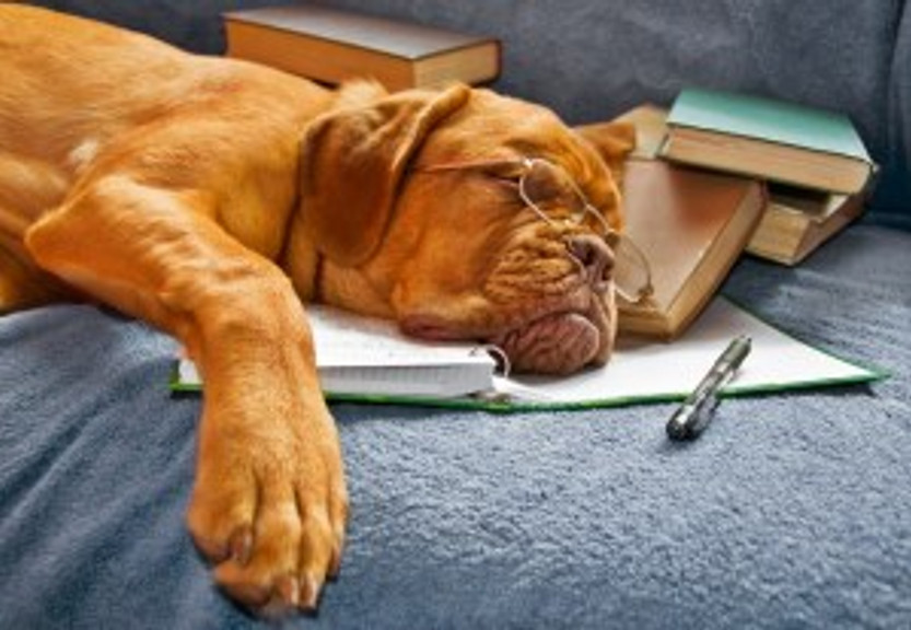 Dog Sleeping in her Notebook after Studying