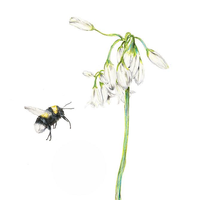 Bumble Bee & Wild Garlic card 150mm x 15