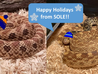 Happy Holidays From Our Favorite SOLE Reptiles!