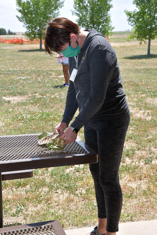 SOLE Teacher Clara building a bird nest.