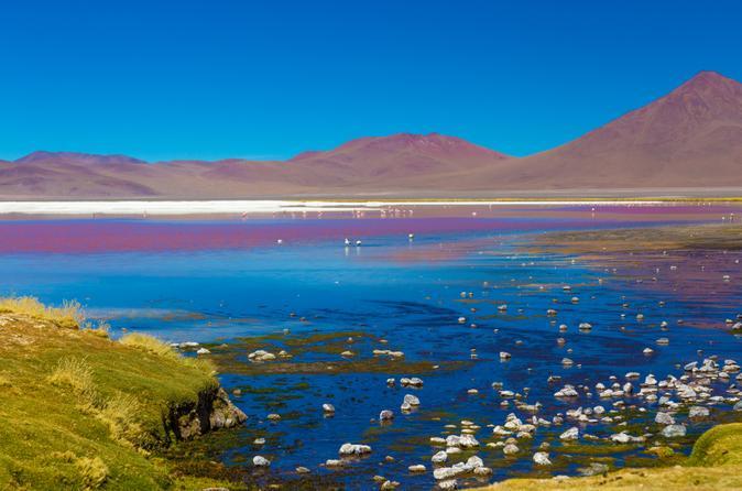 atacama-salt-flat-lagoons-tour-including-ojos-del-salar-from-san-in-san-pedro-de-atacama-157046