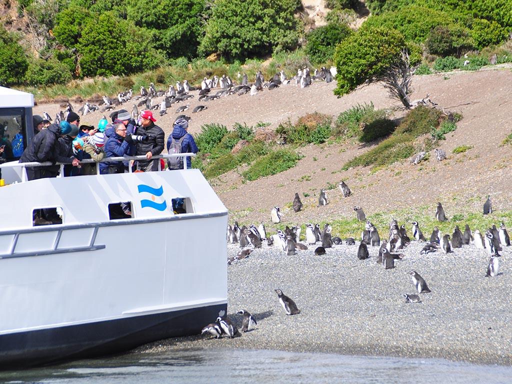 Pinguinos en Isla Martillo.jpg