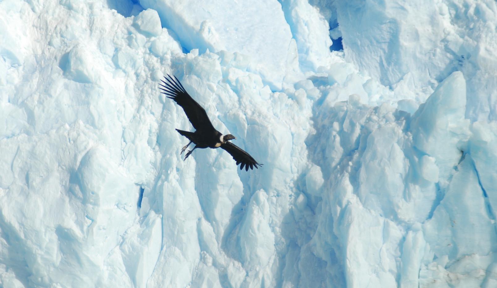 Perito Moreno 15 - Condor.JPG
