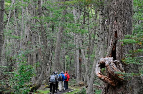 Trekking-en-Parque-Nacional.jpg