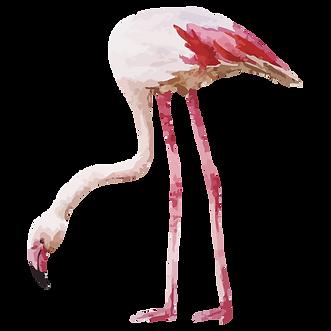 Flamingo%202_edited.png