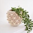 Plant Pot Etsy Listing 1.jpeg