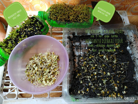 Plant-Based Living with WIJABA Pendidikan