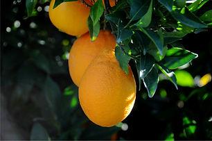 3 oranges bio 2.jpg