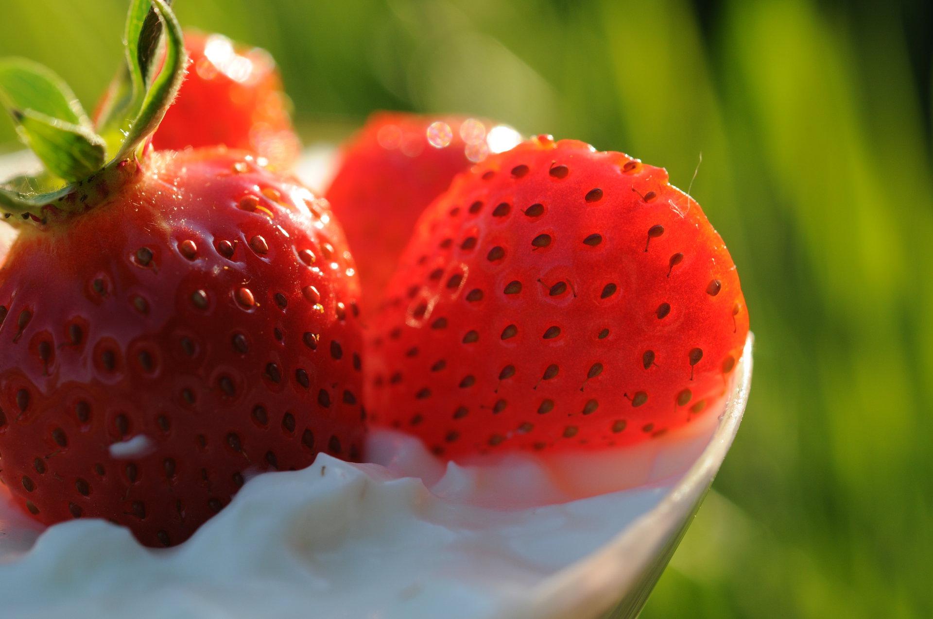 Les fraises tout le mois de juin