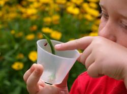 Le petit entomologiste
