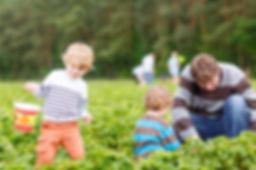 famille cueillette fraises.jpg