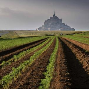 Les carottes de la baie du Mont Saint Michel au marché de la ferme des Authieux.
