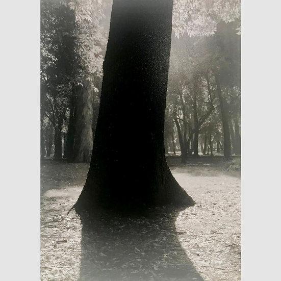 Alexander Hung - Entre árboles