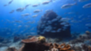 ykkertur, dykkersteder,krabbe, dyk, dykkermaske, snorkel, dykkerrejse,koraller,