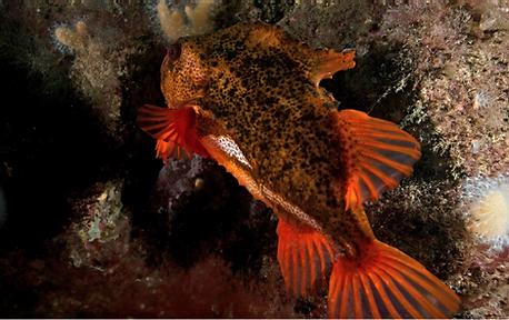 ykkertur, dykkersteder, tangreje,krabbe, dyk, dykkermaske, snorkel, munkholmbroen, fisk
