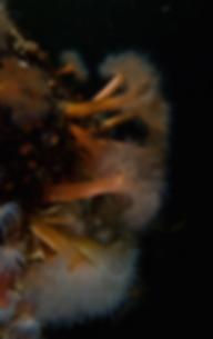 dykkertur, dykkersteder, tangreje,krabbe, dyk, dykkermaske, snorkel, munkholmbroen,