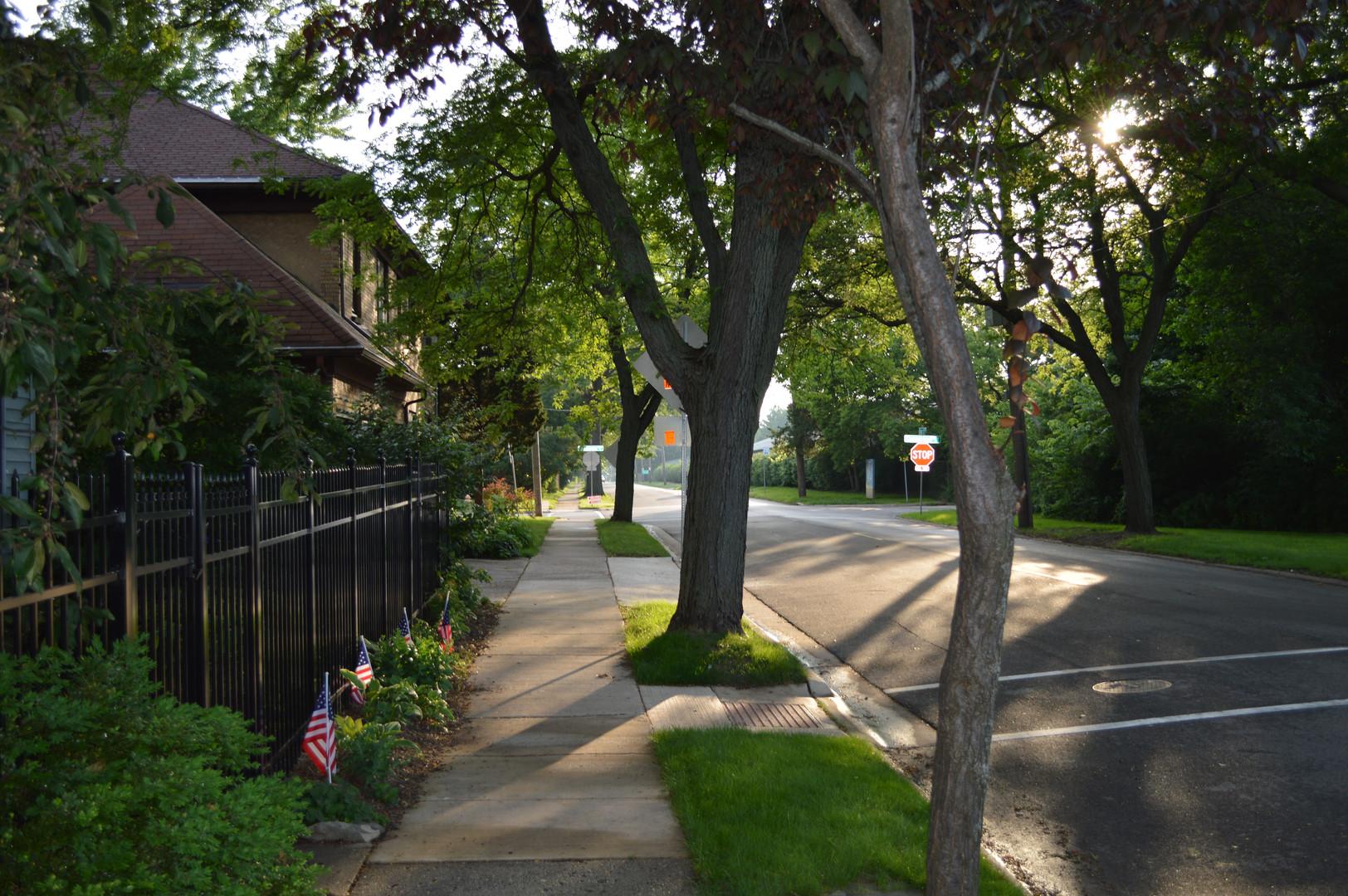 Tree-lined Fulton Avenue