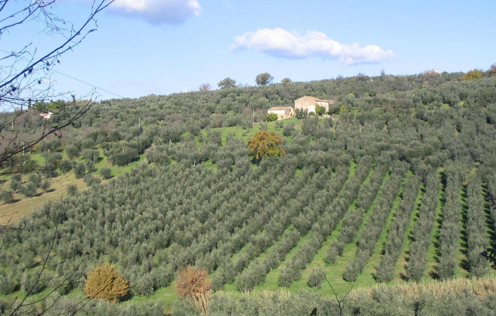 Panoramica dei terreni in località Fonte Luna