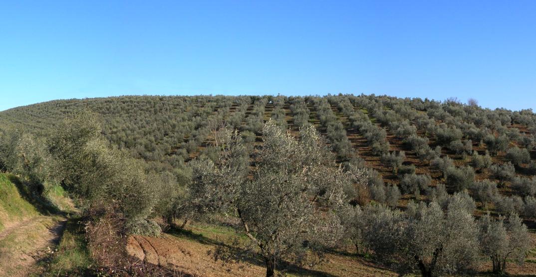 Panoramica dei terreni in località Colle dei Frati