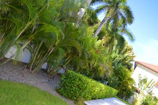 Phillips Landscape - backyard