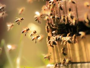 O životě včel, hrdinek všedních dní