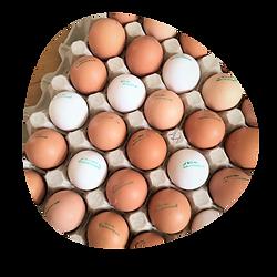 vejce.png
