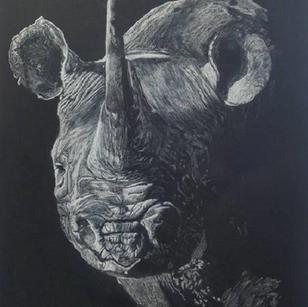Chalk Pencil Sketch - rhino