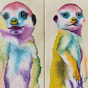Rainbow Meerkats