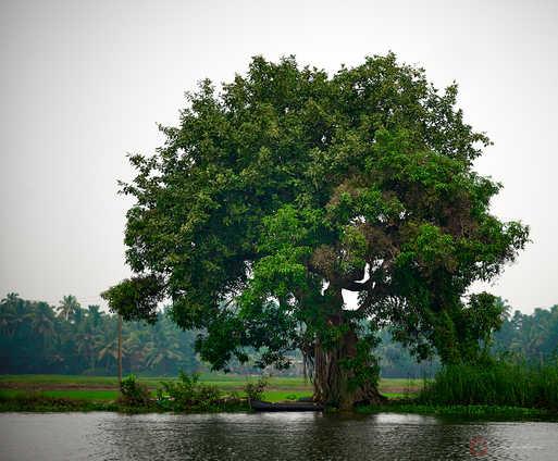 Backwater Tree