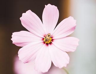 Pink flower 01.jpg