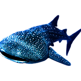whale-shark-philippines-min.png