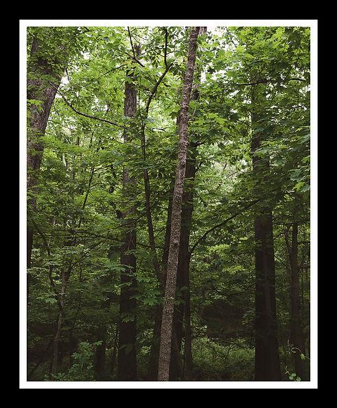 framedshotsforwix-trees.jpg