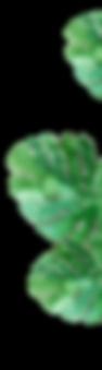 composizione foglie copia.png