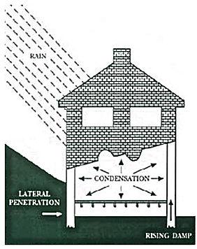 rising damp London illustration