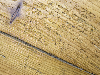 Watch Out For Woodworm Scams!