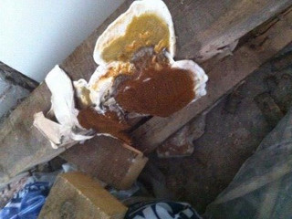 What Are The Signs Of Dry Rot?