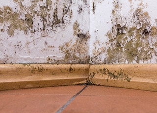 Timber Decay & What You Can Do About It