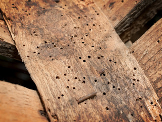 5 Signs Of Woodworm To Look Out For